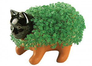 Chia Pet Kitten
